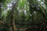 Gunung Palung hutan hujan