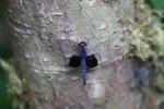 Brilliant blue dragonfly [kalbar_0710]