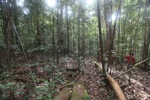 Hutan hujan di Kalimantan, Indonesia