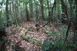 Bird nest in the rainforest [kalbar_0830]