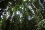 Rainforest in Indonesian Borneo [kalbar_0846]