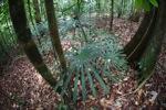 Rainforest in Indonesian Borneo [kalbar_0844]