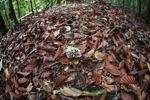 Cluster of rainforest fungi