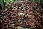 Cluster of rainforest fungi [kalbar_0867]