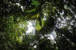 Borneo rainforest [kalbar_0432]