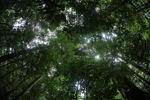 Borneo rainforest [kalbar_0875]