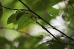 Walking stick insect [kalbar_0938]