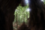 Forest seen through a hole in a tree trunk