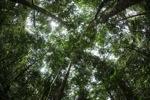 Rainforest in West Kalimantan [kalbar_1047]