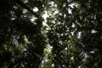 Rainforest in West Kalimantan [kalbar_1009]