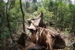 Ditebang pohon hutan hujan