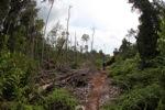 Devastated rainforest landscape in Borneo [kalbar_1102]
