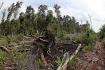 Hancur lahan gambut di Kalimantan