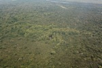 Airplane view of forest degradation in Indonesia [kalbar_1176]