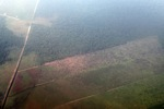 Aerial vew lahan gambut dibersihkan di Indonesia, Propinsi Kalimantan Barat