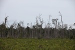 Deforested peat forest in Indonesian Borneo [kalbar_1318]