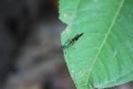 Butterfly [kalbar_1361]