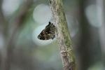 Butterfly [kalbar_1504]