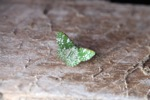 Green moth [kalbar_1409]