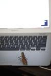 Grasshopper on an Apple computer
