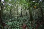 Rainforest understory [kalbar_0467]