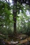 Bridge over a rainforest creek [kalbar_1492]