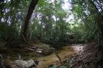 Bridge over a rainforest creek [kalbar_1493]