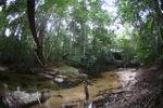 Bridge over a rainforest creek [kalbar_1494]