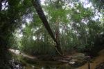 Bridge over a rainforest creek [kalbar_1496]