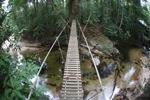 Jembatan di atas sebuah sungai hutan hujan