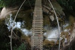 Bridge over a rainforest creek