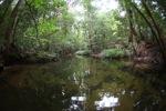 Clearwater rainforest creek