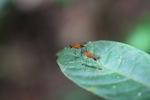 Orange flies with purple eyes [kalbar_1534]