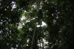 Kalimantan forest [kalbar_1564]
