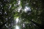 Kalimantan hutan