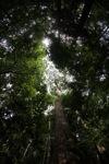 Kalimantan forest [kalbar_1584]