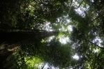 Kalimantan forest [kalbar_1568]