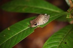 Frog [kalbar_1669]