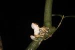 Tree frog [kalbar_1691]