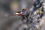 Gold dragonfly [kalbar_1763]