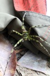Giant green spider