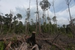 Cut and drained peat swamp forest [kalbar_2205]