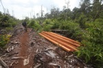 Illicit timber feeds Indonesia's industrial forestry sector, alleges new report