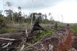 Deforestasi hutan hujan di Kalimantan
