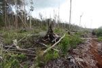 Deforestasi lanskap di Kalimantan