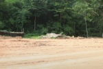 Poles cut from the rainforest along a mining road in Borneo