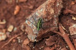 Green dragonfly [kalsel_0008]