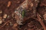 Green dragonfly [kalsel_0009]