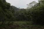 Forest clearing in Taman Hutan Raya [kalsel_0127]