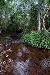 Rainforest creek in Taman Hutan Raya [kalsel_0138]